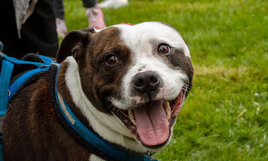 Animal charity fundraising